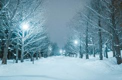 北海道Hokkaido,Winter royalty free stock photos