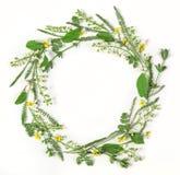 圆的框架花圈由被隔绝的春天花和叶子制成在白色背景 平的位置 免版税库存图片