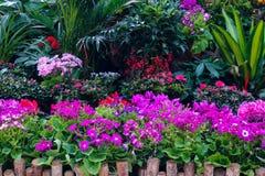 分配为花坛的区域 图库摄影