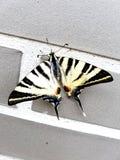 Ładny życzliwy i kochający motyl zdjęcie royalty free