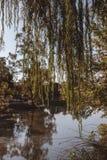Ładny park z jeziorem i udziałami roślinność zdjęcie stock