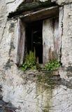 Łamany okno na białej ścianie w zaniechanym domu z ziele i roślinami r w nadokiennym parapecie, zdjęcie royalty free