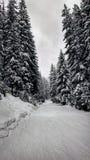Łatwy narciarski skłon w lesie zdjęcia royalty free