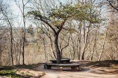 Ławka pod niezwykłym i pięknym drzewem pojęcie beznadziejność, samotność zdjęcie royalty free