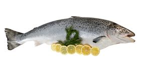 Łosoś Rybia Cała ryba Odizolowywająca Na bielu fotografia stock