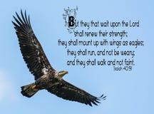 Łysego Eagle biblii werset zdjęcia royalty free