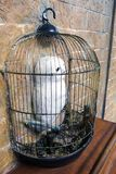 哈利波特多雪的猫头鹰雕塑在笼子的在墙壁 库存照片