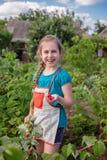 儿童的采摘的莓 一逗人喜爱的女孩收集在一个有机莓农场的新鲜水果 从事园艺的孩子和 图库摄影