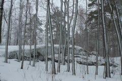 冬天在Karelija 库存照片