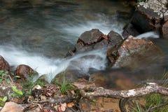 冲在小河下的水在巴西的Savannas 免版税库存照片