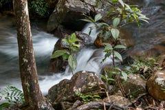 冲在小河下的水在巴西的Savannas 库存照片