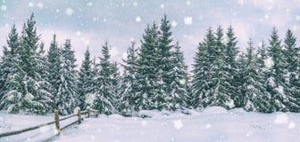 农村冬天风景,全景,横幅-多雪的杉木森林的看法 免版税图库摄影