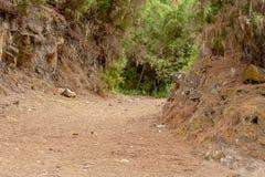 凉快的供徒步旅行的小道通过森林 免版税库存照片