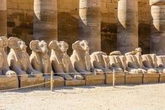 公羊带头的狮身人面象的大道在卡尔纳克寺庙的 埃及卢克索 免版税图库摄影