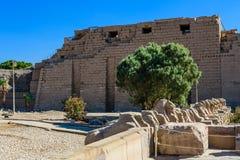 公羊带头的狮身人面象的大道在卡尔纳克寺庙的 埃及卢克索 库存照片