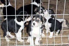 六只小狗在避难所房子里 免版税图库摄影