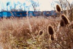 关闭在Blurred狂放的草甸和火车的起毛机 免版税库存照片