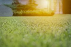 关闭绿草领域有迷离公园背景、春天和夏天概念 免版税库存照片