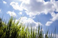 关闭,在观点的新鲜的新的成长草下,看通过草,太阳早晨光芒,轻,绿色概念,救球 免版税库存照片