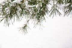 具球果分支用新鲜的雪,特写镜头包括 免版税库存图片
