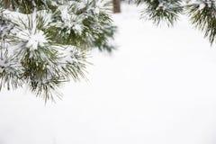 具球果分支用新鲜的雪,特写镜头包括 库存照片