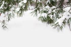 具球果分支用新鲜的雪,特写镜头包括 免版税库存照片