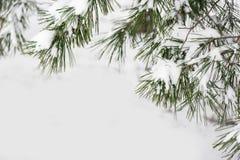 具球果分支用新鲜的雪,特写镜头包括 图库摄影
