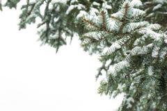 具球果分支用新鲜的雪,特写镜头包括 免版税图库摄影