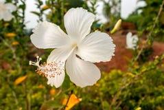 典雅的白花异乎寻常的背景 库存图片