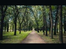 ścieżka park zdjęcie stock