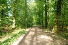 Ścieżka w Czarnym lesie, Niemcy fotografia stock