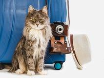 Śliczna figlarka, elegancka walizka, kapelusz i kamera, fotografia stock