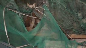 Śliczne szarość kocą się spojrzenie z niespodzianką przez zielonej siatki w alei nocy miasto 4K zbiory wideo