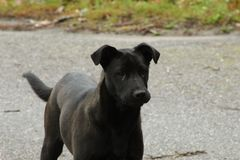 Śliczni czarni i popielaci psy zdjęcia stock
