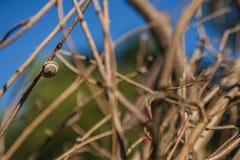 Ślimaczek dołączający dzika roślina w polu fotografia stock