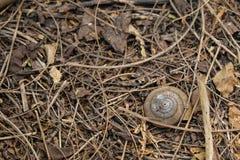 Ślimaczek Shell na ziemi zdjęcie royalty free