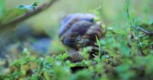 Ślimaczka czołganie na trawie