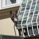 Śmieszna psia postawa zdjęcie stock