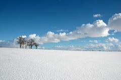 Śnieżni pola na pogodnym zima dniu fotografia royalty free