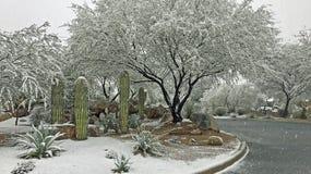 Śnieg spada na Saguaros w Tucson Arizona fotografia royalty free