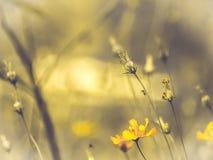 Śródpolny kosmosu kwiat dokąd słońce wzrasta Żółty brzmienie lato wiosny czas w kontekście niebieskie chmury odpowiadają trawy zi fotografia royalty free