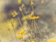 Śródpolny kosmosu kwiat dokąd słońce wzrasta Żółty brzmienie lato wiosny czas w kontekście niebieskie chmury odpowiadają trawy zi obraz royalty free