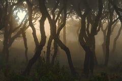 Światełko światło w drewnie fotografia royalty free