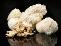 Świeża Hericium pieczarka - Zdrowy odżywianie zdjęcia stock