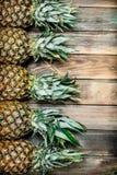 Świeży fragrant ananas obrazy stock