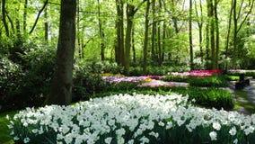 Świeży gazon z kwiatami zbiory wideo