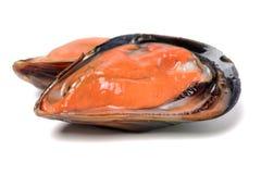 świeży mussel obraz stock
