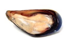 świeży mussel obraz royalty free