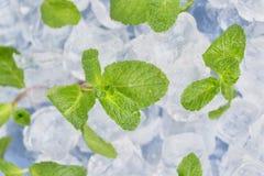 Świeży nowych liści kłamstwo na kostka lodu przygotowanie koktajle Pojęcie świeżość i czystość zdjęcie royalty free