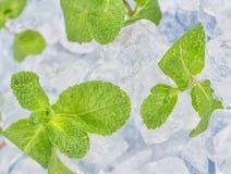 Świeży nowych liści kłamstwo na kostka lodu przygotowanie koktajle Pojęcie świeżość i czystość zdjęcia royalty free